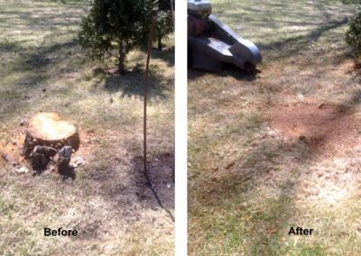 Stump Grinding Before and After Image