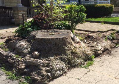 Big Stump 1