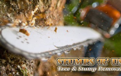 Trusted Tree Services in St. Thomas Ontario
