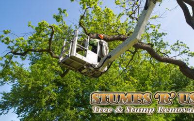 Tree Services in Talbotville Ontario