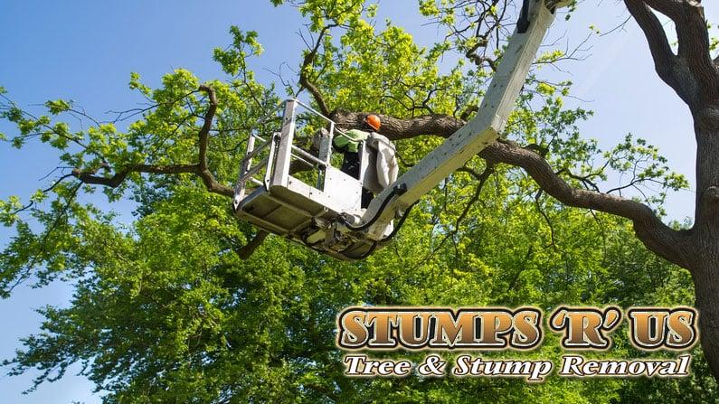 Tree Services in Talbotville