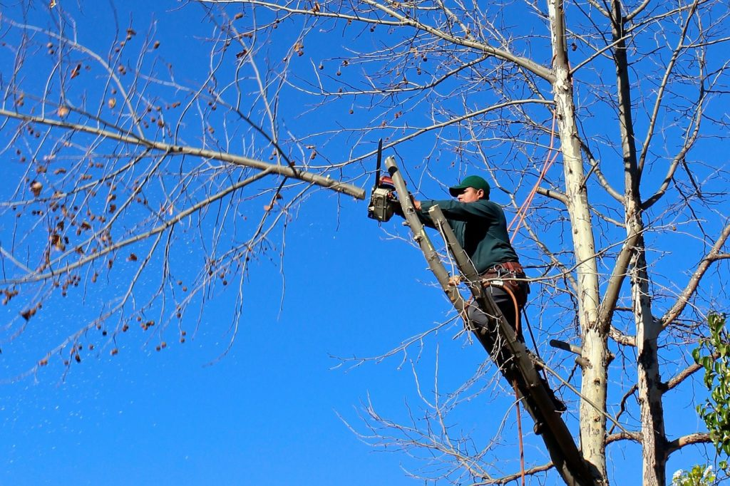 Tree Removal Services Talbotville