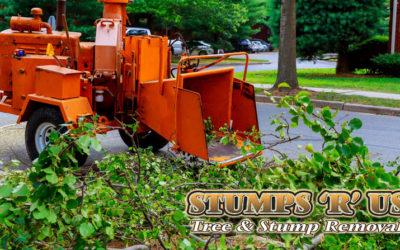 Tree Services in New Sarum Ontario