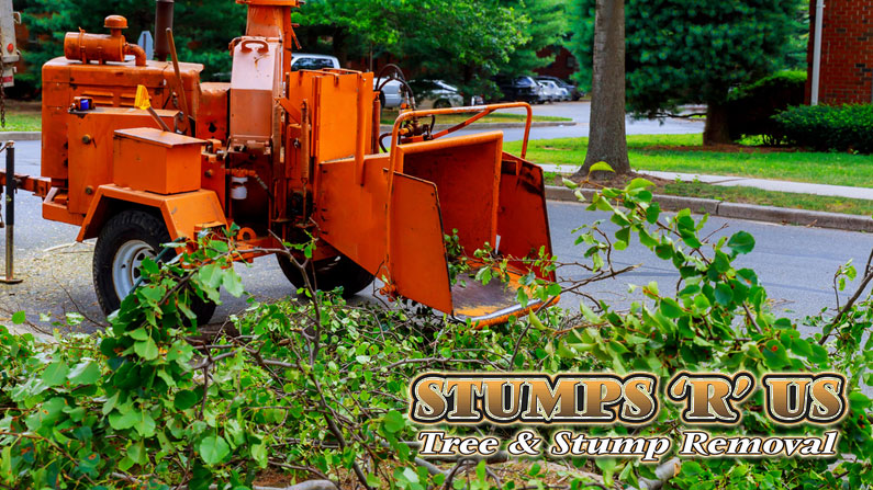 Tree Services in New Sarum Ontario