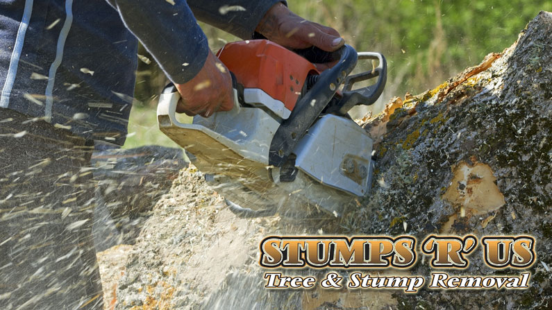 Tree Services in Aylmer Ontario