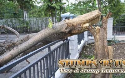 Tree Services Port Stanley Ontario