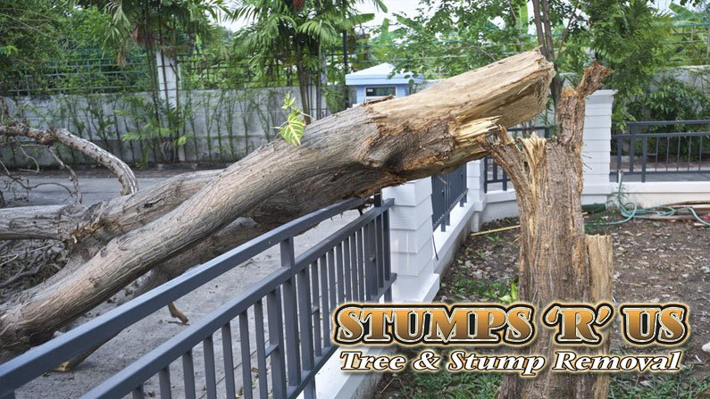Tree Services Port Stanley