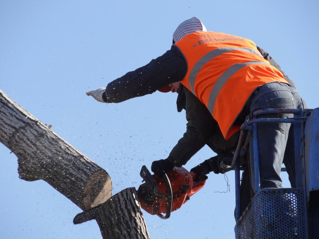 Tree Services London Ontario