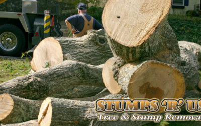 Tree Service in London Ontario (What You Should Know Before Hiring!)