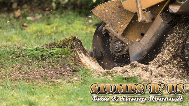 5 Reasons to Schedule a Tree Stump Removal