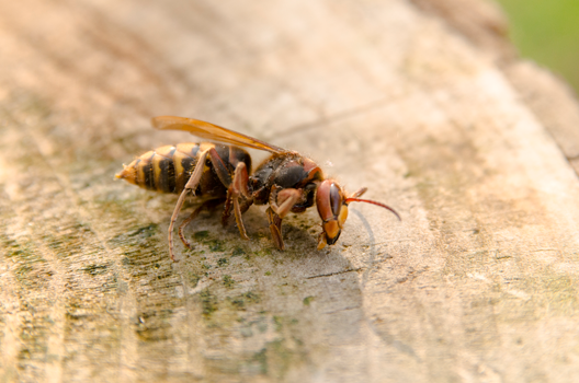 wasp on a tree stump