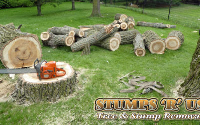 Affordable Tree Services in London Ontario