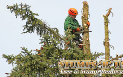How to Choose a Reputable Tree Removal Service Company