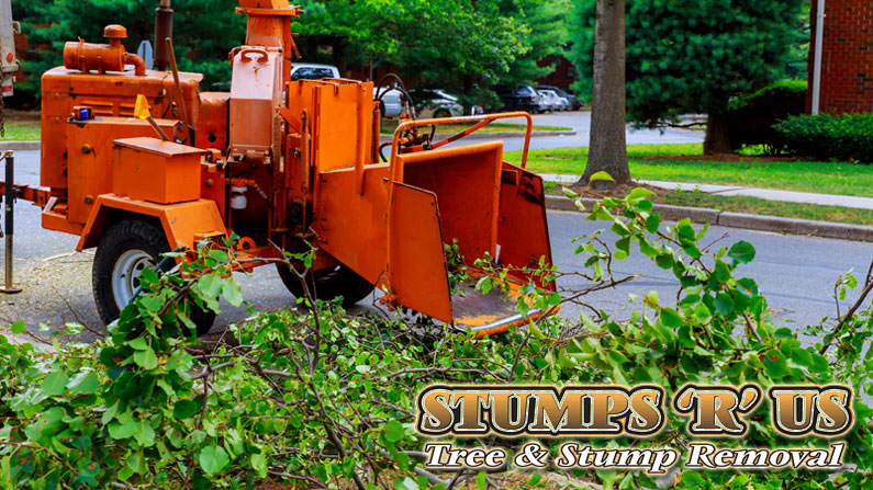 Complete Tree Service Company in London Ontario