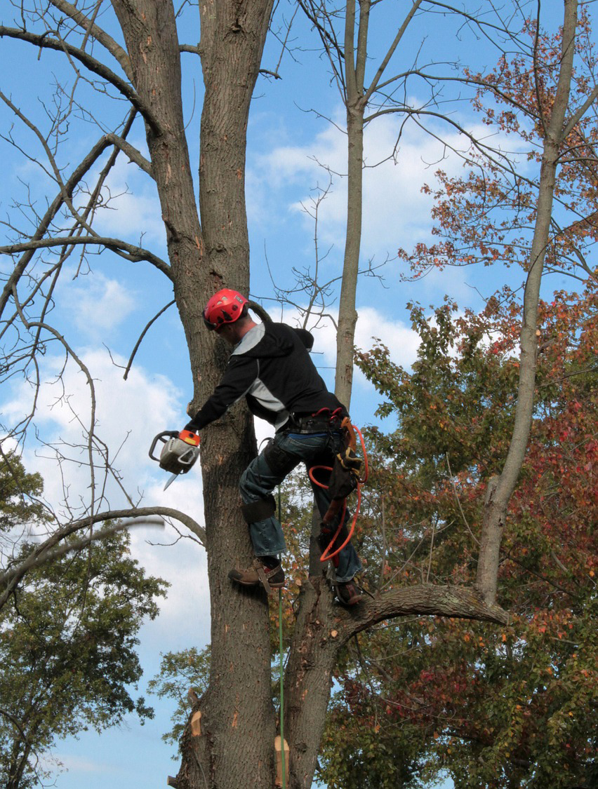 Professional Arborist London Ontario
