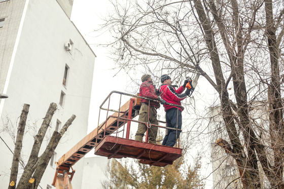 Commercial Tree Services in Lyndhurst