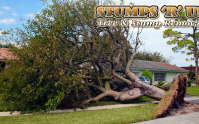 Tree Services in West Lorne Ontario | A Company You Can Trust