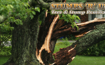 Tree Services Near Me – Call The Experts