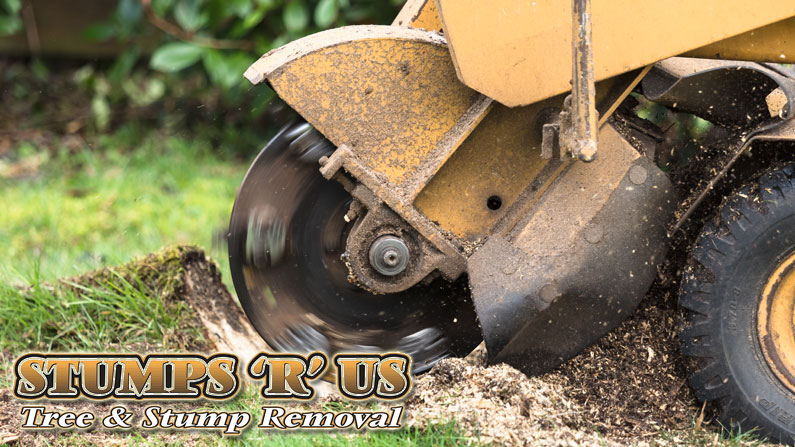 Stump Grinding & Stump Removal in Sarnia Ontario