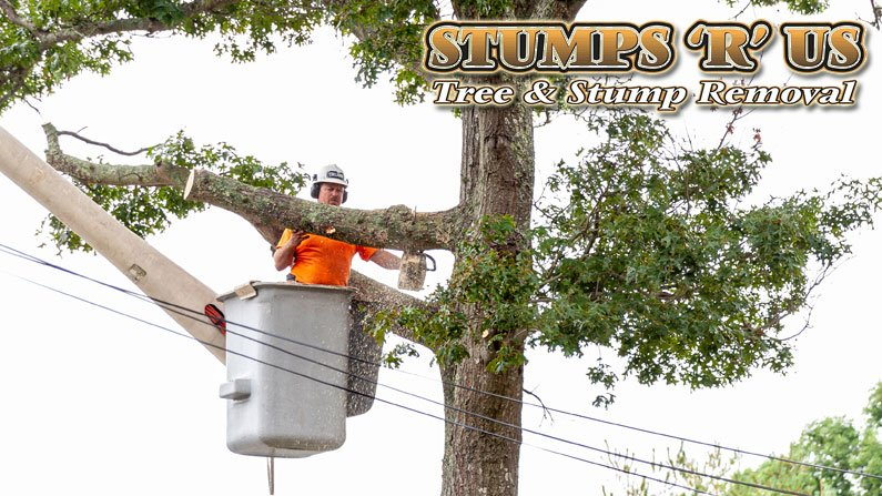 Commercial Tree Removal Services