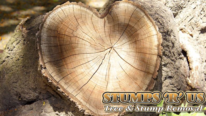 St. Thomas Tree Care Company