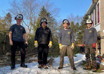 Meet the Tree Removal Team