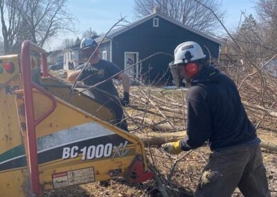 Tree Removal Clean-up