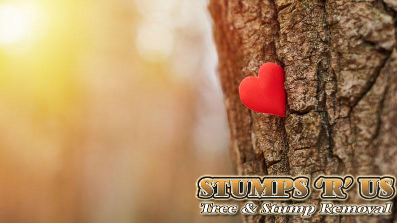 Tree Arborist London Ontario – 5 things to ask them!