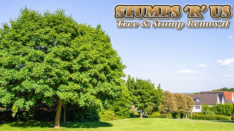 Tree Surgeon vs Arborist: What is the Difference?