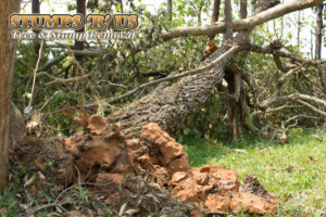 protect your trees from storms