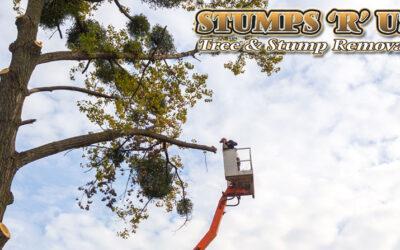 Tree Maintenance in London Ontario
